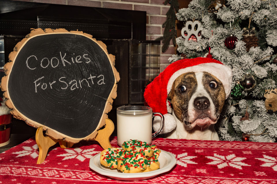 Christmas Cookie Recipes 2019.Holistic Canine Cranberry Christmas Cookie Recipe