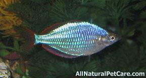 Naturally Enhance the Color of Aquarium Fish