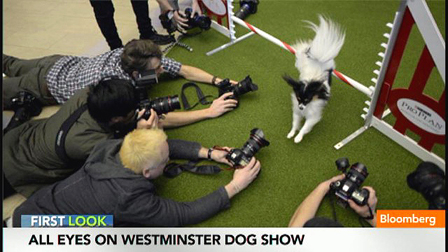 Fans Howling for the Westminster Dog Show