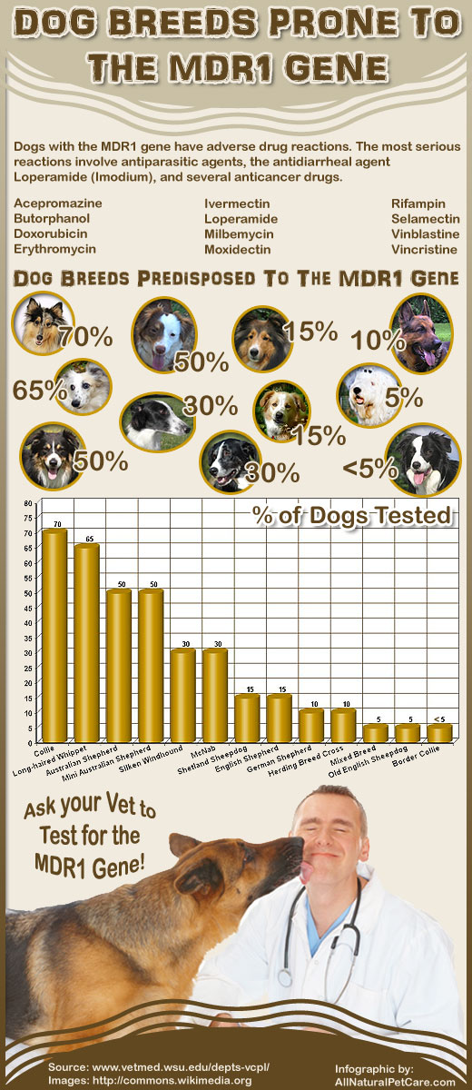 Dog Breeds Predisposed to Adverse Drug Reactions (Infographic)