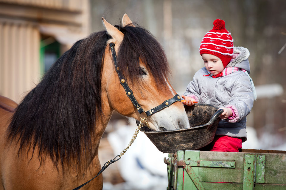 Natural Horse Treat Recipe: Healthy Warm Mash