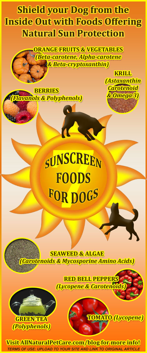 Natural Sunscreen Foods for Dogs - Infographic