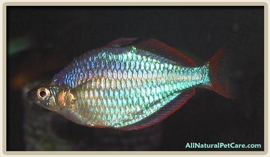Top 15 Natural Foods and Herbs for Breeding Fish