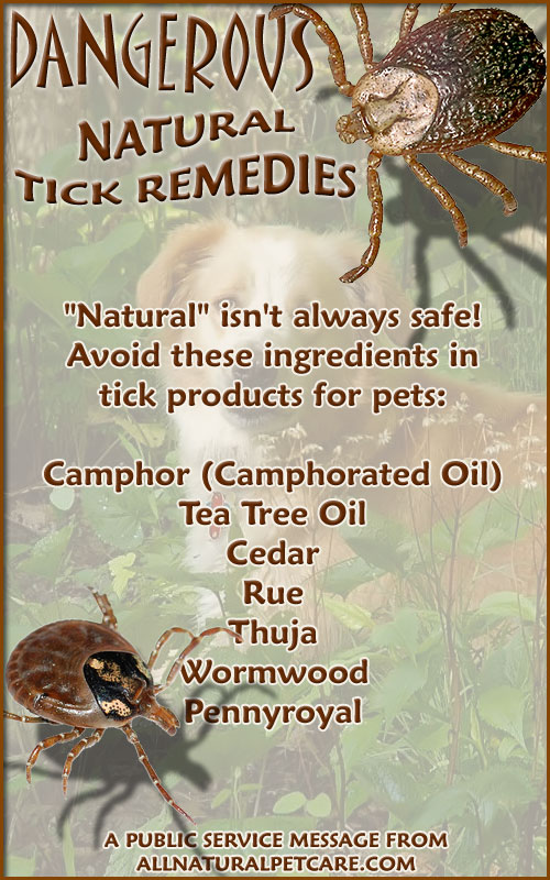 Dangerous Natural Tick Remedies - Infographic