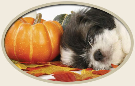The Benefits of Pumpkin Seeds for Pets