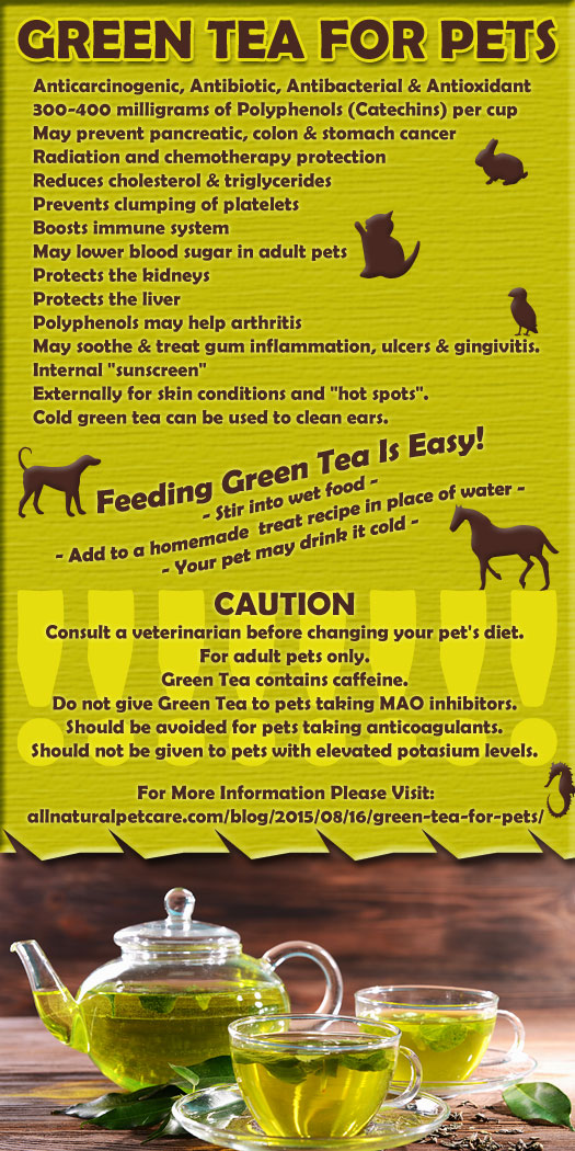 Green Tea For Pets Infographic