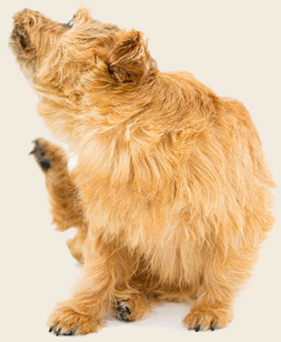 Best Natural Remedies for Dog and Cat Allergies