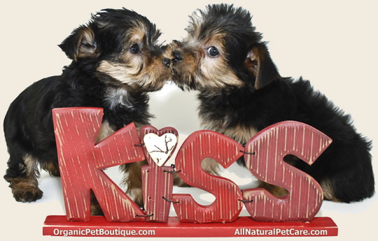 Win 150 Organic Bully Bites for your Doggy Valentine!