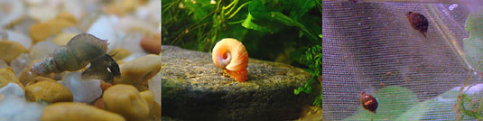 4 Aquarium Gravel Questions That Will Make Or Break Your Tank - Pest Snails