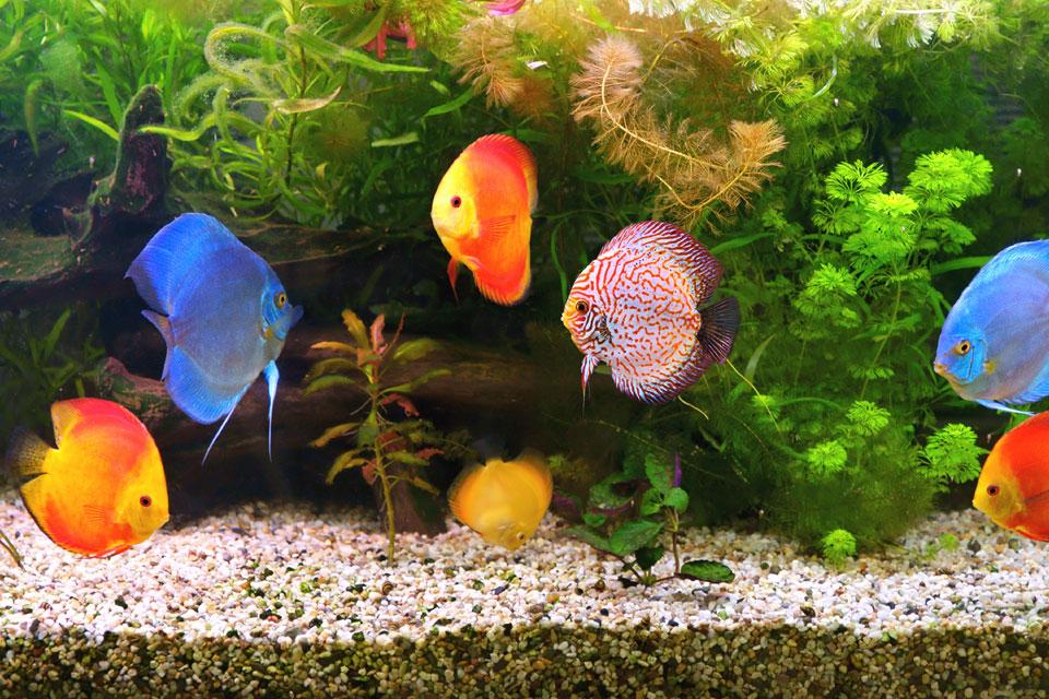 Aquarium Fish Tank Pebbles Decorative Rainbow Coloured