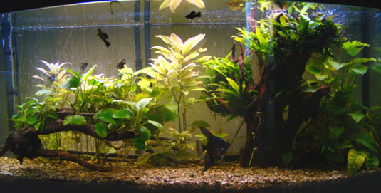 4 Questions About Aquarium Gravel That Will Make Or Break Your Tank