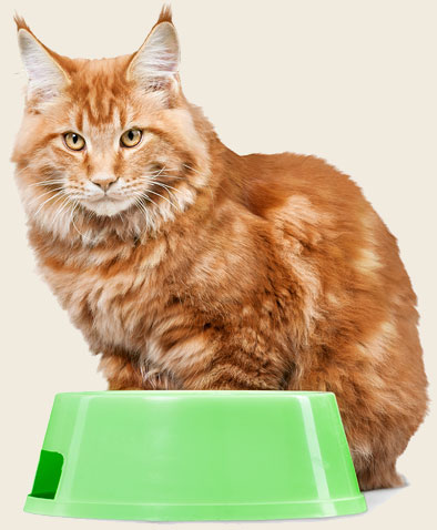 Reading the Label: How to Know Your Cat's Food Has Tuna (Or Any Other Ingredient)