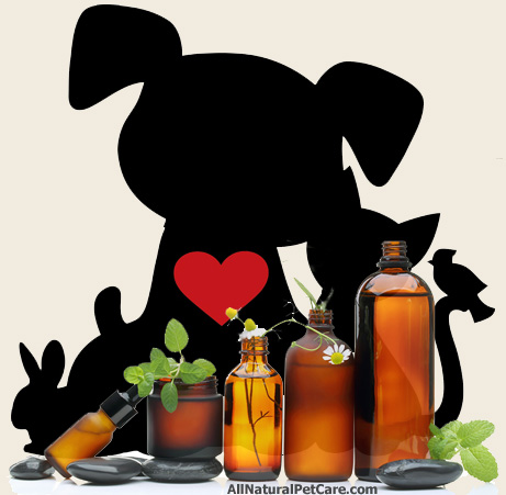 The Science Behind Herbal Remedies for Pets