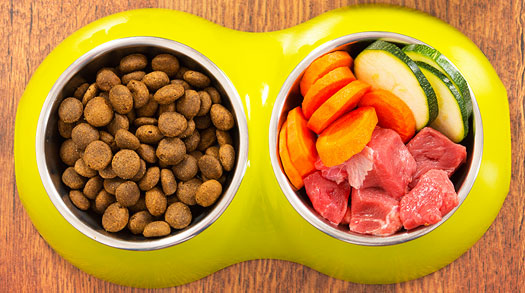 High Protein Diets Can Be A Dog's Best Friend