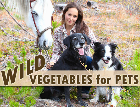 Wild Vegetable and Herb Foraging for Pets
