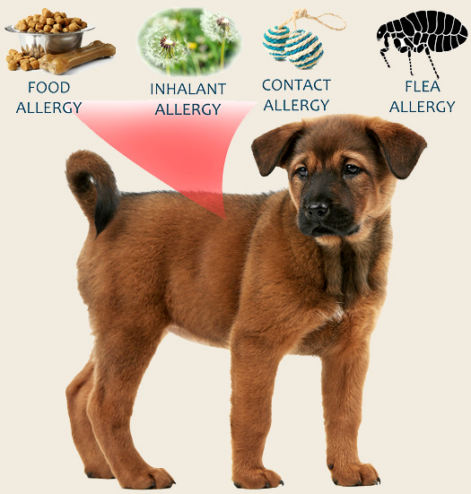 Natural Ways to Tackle Your Dog's Allergies