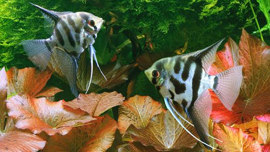 DIY Gelatin Aquarium Fish Food
