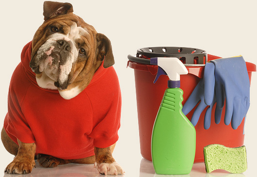 How to Reduce your Pet's Toxic Load