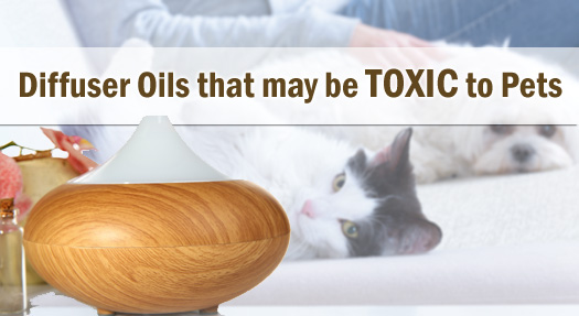 Common Diffuser Essential Oils that may be Toxic to Dogs, Cats, Birds and Other Pets