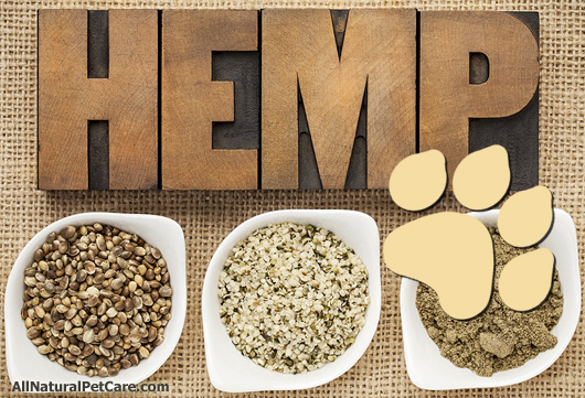 All About Hemp for Dogs