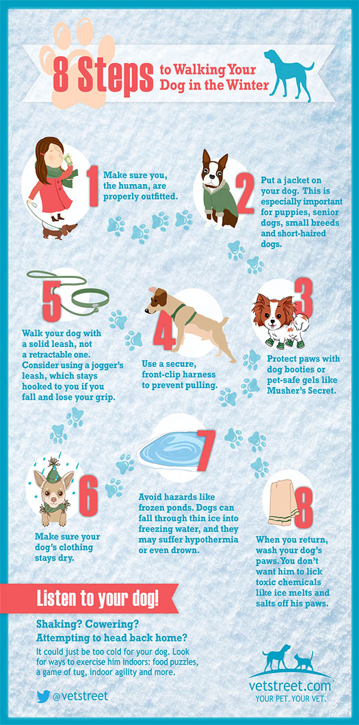 Dog Walking Safety - Winter