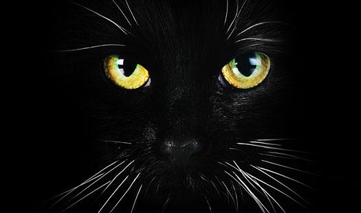 Black Cat Campaign