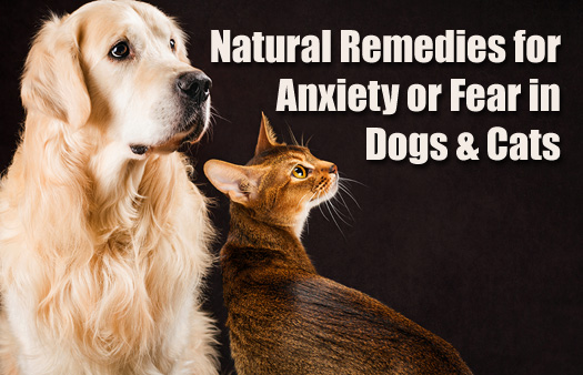 7 Natural Remedies for Anxiety, Nervousness or Fear in Dogs and Cats