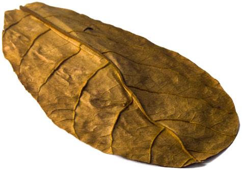 T. catappa Leaves for Aquariums