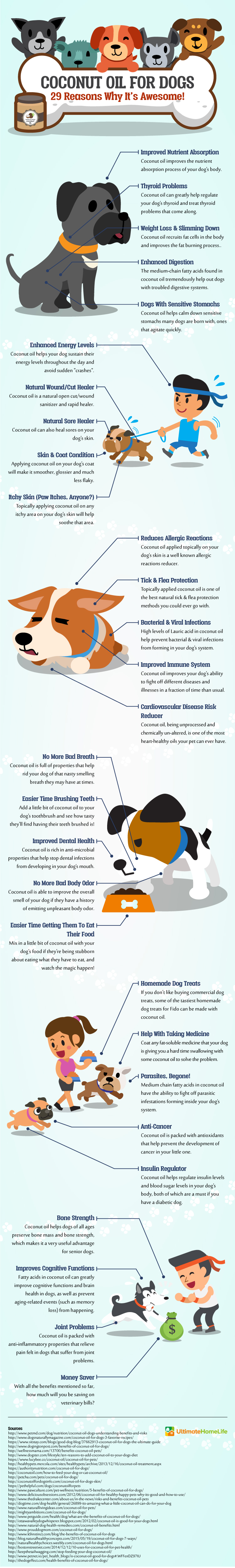 Experts Weigh in on Coconut Oil for Dogs Infographic